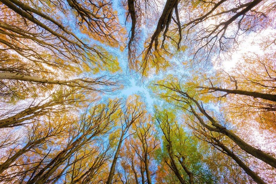 trees-5605176_960_720